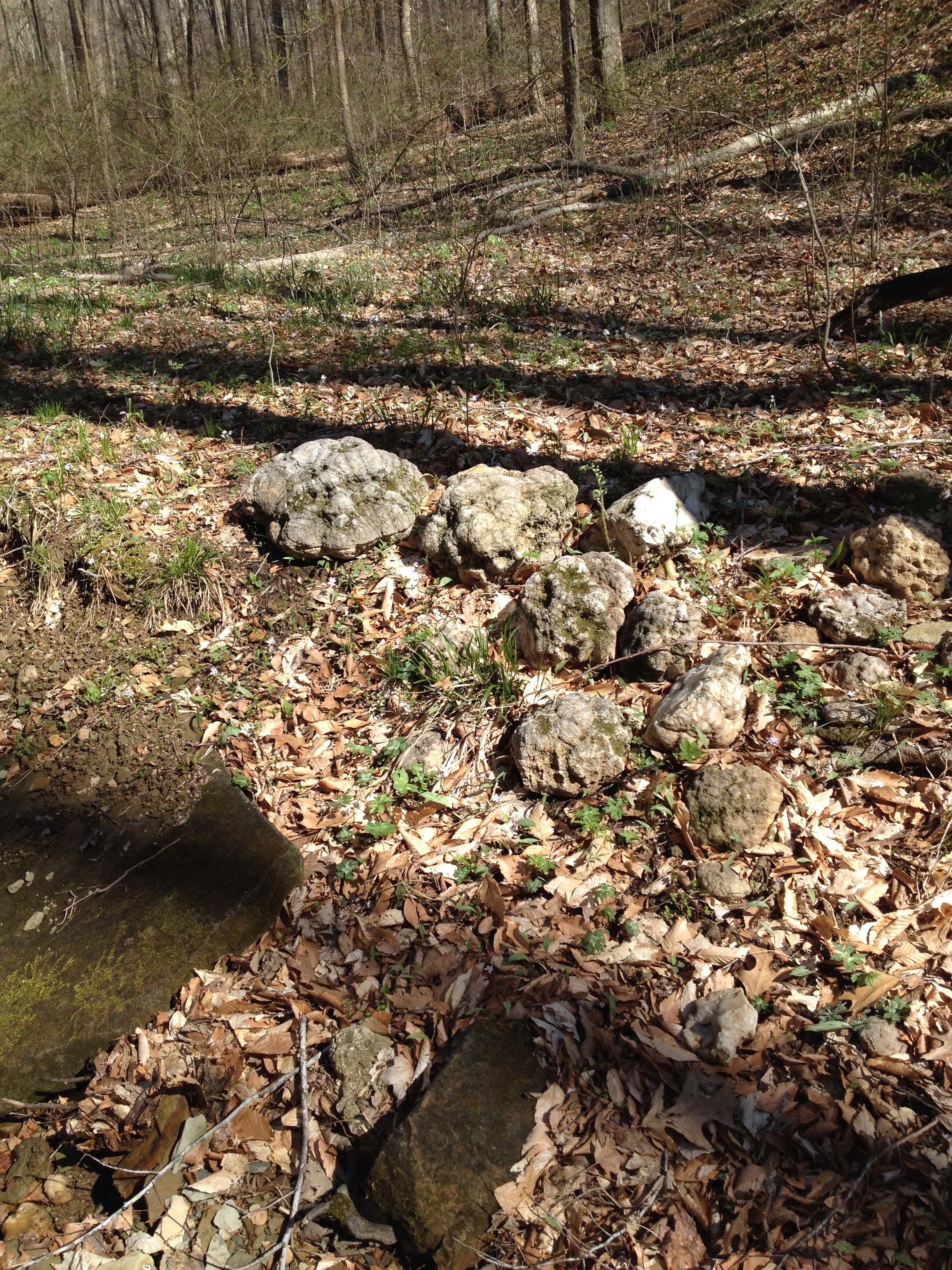 Jersey City Ford >> Geode Hunt in remote Southern Indiana